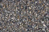 Crushed seashell background