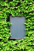 _Empty Board Surrounded By Leaves Of Ivy, Closeup
