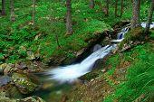 Rushing stream in Bulgaria