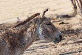 Close Portrait Of A Donkey