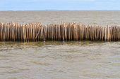 Bamboo breakwater