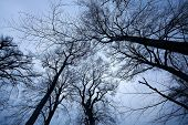 Creepy leafless trees in dark