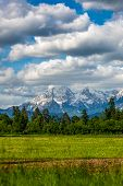 foto of snow capped mountains  - Beautiful view of green meadow and forest with snow capped mountains in background - JPG