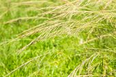 Reeds Field Background.