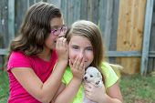 kid girls playing with puppy pet chihuahua with doggy outdoor