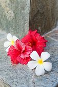 Still Life of Tropical Hibiscus and Plumeria Flowers Against Stone Background