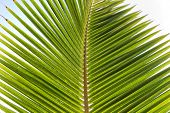 Close Up Nature Detail of Palm Frond