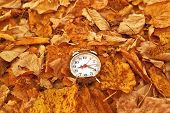 picture of pass-time  - Vintage alarm clock in dry autumn leaves Passing of time and season change concept - JPG