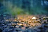 stock photo of toadstools  - Little white toadstool in sunbeam in forest