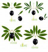 Black olives. Vector illustration.