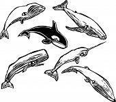 Grupo de baleia