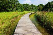 Wooden Bridge over a Pond