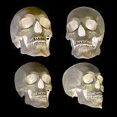 set of human skull isolated on black background