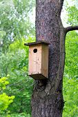 House For Birds
