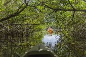 Kayaking In Everglades National Park, Florida, Usa