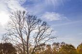 Leaveless Tree