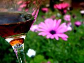 picture of shiraz  - Sipping Glass of Cabernet - JPG