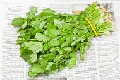 Fresh Coriander Leaves In Bunch On Newspaper