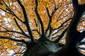 Looking Up Into The Canopy Of An Autumn Tree