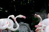 foto of pink flamingos  - Pink flamingo and green background in river - JPG
