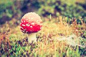 picture of toadstools  - Beautiful red autumnal toadstool  - JPG