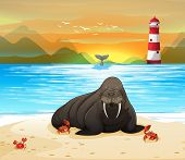 picture of lion  - Sea lion on a beach with sunset background - JPG