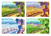 image of grape  - Rural landscape with vineyard and grapes bunches - JPG