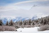 stock photo of coniferous forest  - Coniferous forest in the snow at the foot of the mountain - JPG