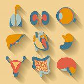 foto of human internal organ  - Set of icons for medical theme - JPG