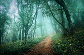 picture of cold-weather  - Road through a mysterious dark forest in fog with green leaves and yellow flowers - JPG