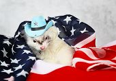 foto of ferrets  - Little cute ferret in a cowboy hat on the USA flag background - JPG