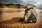Beach Zebra