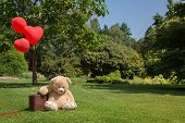 stock photo of forgiveness  - Sad and lonesome teddy bear with red hearts balloons - JPG