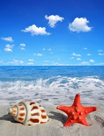 stock photo of conch  - Conch shell with starfish on beach  - JPG