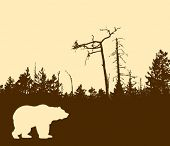 vector silhouette bear