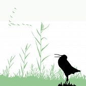 stock photo of snipe  - silhouette of the snipe - JPG