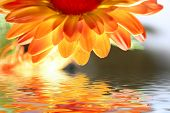 orange flower above the water