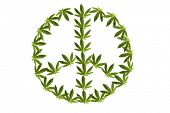 marijuana peace sign. isolated on white with room for your text. real marijuana leaf layered into a  poster