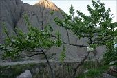 Apple Tree At The Seashore