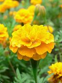 Yellow Flower Closeup #2