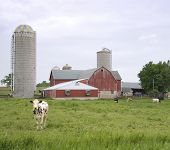 Small Dairy Farm