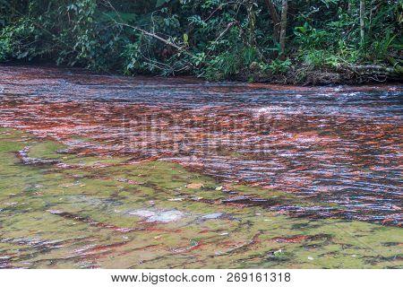 Qubrada De Jaspe Jasper Creek