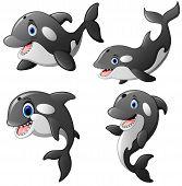 Vector Illustration Cartoon Of The Killer Whale Set poster
