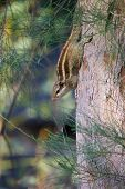 Squirrels Are Members Of The Family Sciuridae, A Family That Includes Small Or Medium-size Rodents.  poster