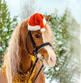 Little Horse In The Winter Forest In The New Year. Nightingale Welsh Pony In A Christmas Red Cap In  poster