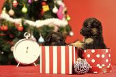 Dog Year, Pet And Animal On Red Background. Boxing Day And Winter Xmas Party. New Year, Cute Puppy G poster