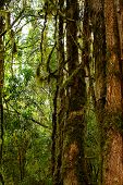 stock photo of epiphyte  - Tropical forest - JPG