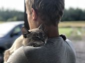 Happy Meeting Of The Gray Blue-eyed Cat With The Owner After Parting, The Cat Gratefully Hugs The Bl poster