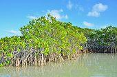 Vegetação de mangue em Sian Ka uma reserva da Biosfera, Tulum, Mexico