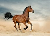 Purebred Colt In Prairies Running On The Wild poster
